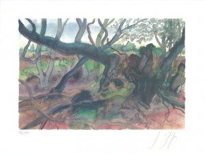 Waldlandschaft auf Møn